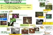 2007年6月9日-アヤメ平・横田代のようす