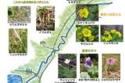 2007年6月12日-大江湿原のようす