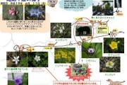 2007年6月11日 – 尾瀬ヶ原のようす