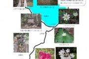 2007年6月13日 – 一ノ瀬~三平峠のようす