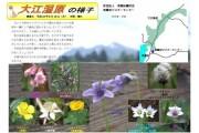 2007年6月18日-大江湿原のようす