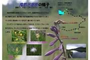 2007年8月9日-鬼怒沼湿原のようす