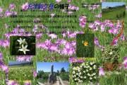 2007年8月12日-会津駒ケ岳のようす