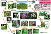 2007年8月13日-尾瀬ヶ原のようす