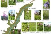 2007年8月21日-大江湿原のようす