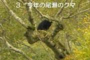 「尾瀬のツキノワグマの生態」について講演しました