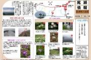 2008年7月18日-会津駒ケ岳のようす
