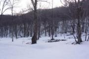 2011年4月20日 – 大清水湿原のようす