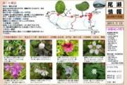 2011年7月13日-会津駒ヶ岳のようす