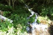大清水の資源調査を行いました (根羽沢鉱山跡・巨樹巨木)
