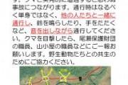 ヨシッ掘田代地区にてツキノワグマ集中対策を実施中です