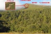 [活動レポート]至仏山で植生回復作業を実施しました
