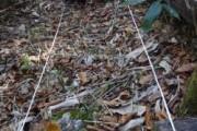 〈活動レポート〉ツキノワグマの生息状況(ブナの豊凶調査)を実施しました