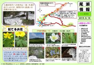 20150616大江湿原(石塚)