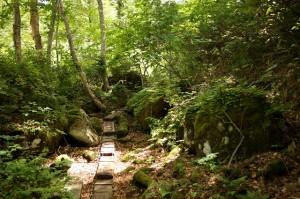 林内の様子