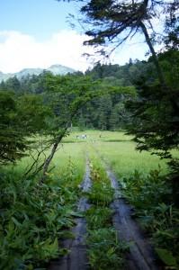 大江湿原への出口