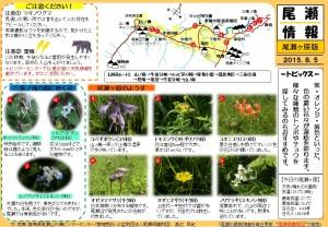 尾瀬ヶ原尾瀬情報20150805(渡辺)