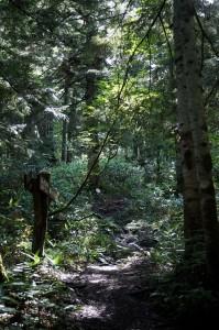 小淵沢田代への林内の様子