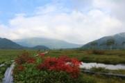 2015年9月4日ー山の鼻ビジターセンターより(尾瀬ヶ原の様子)