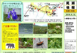 尾瀬ヶ原自然情報20160612 (石塚)