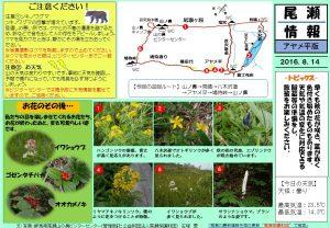 20160814アヤメ平八木沢道尾瀬情報(石塚)