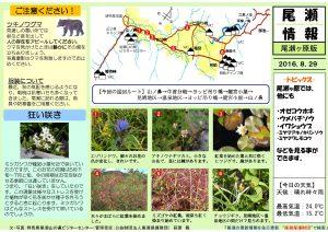 尾瀬ヶ原自然情報20160829(萩原)