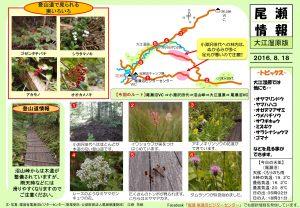 20160818 大江湿原(江崎)