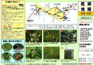 尾瀬ヶ原自然情報20160807 (石塚)