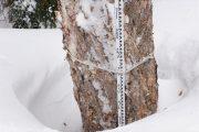 平成29年シーズンの至仏山残雪調査を行いました。