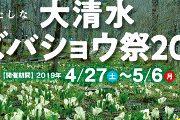 大清水ミズバショウ祭2019の開催について