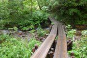 2019年7月27日ー山の鼻ビジターセンターより(森林内の沢や植物の紹介します)