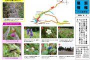 2019年9月3日-大江湿原の様子