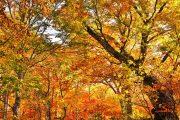 2019年10月18日-山の鼻ビジターセンターより(木々の色付いた尾瀬ヶ原へ)