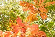 2019年10月6日ー山の鼻ビジターセンターより(木々の紅葉)